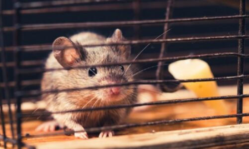 Ideas and Tips to Have a Rodent-free Home