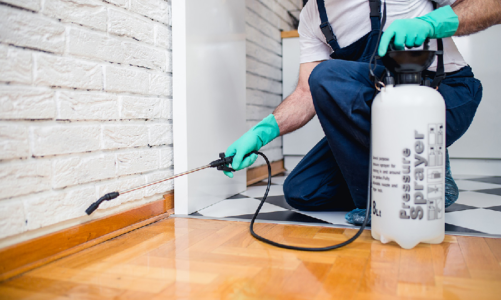 You Must Follow These 'Do's and Don'ts' After Hiring Pest Control