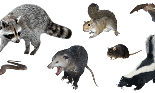 Find The Right Company For Wildlife Removal