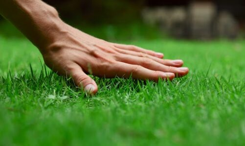 Important Tips to Remember for Taking Good Care of Your Lawn