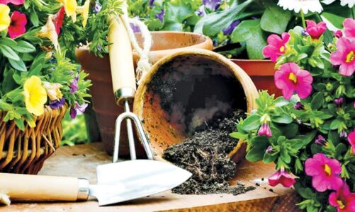 Beginner Gardening Mistakes to Avoid