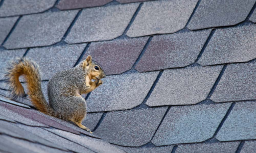 Best Ways To Keeping Squirrels Away From Your Property