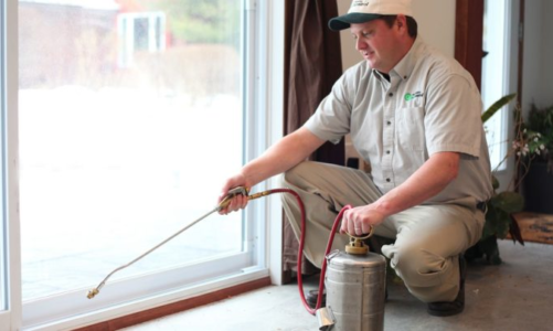 Pest Control Options: DIY Or A Professional Exterminator?