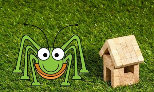 10 Facts About Household Pests That Will Surprise You
