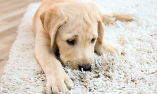 Best Hacks To Remove Pet Odor From Your Home