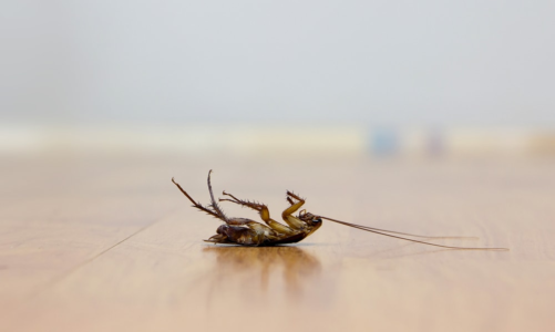 Solving Your Family's Pest Control Woes