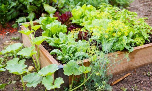 Top Tips For Eco-Friendly Garden Design